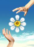 A light bulb with sunflower and sky. Royalty Free Stock Photo