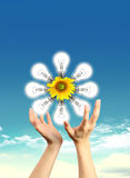 A light bulb with sunflower and sky. Royalty Free Stock Photos