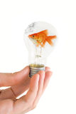 Light bulb with swimming fish Stock Photography