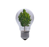 Light bulb with tree Royalty Free Stock Image