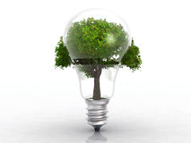 The light bulb and the tree. Relation between energy and ecology Stock Photography