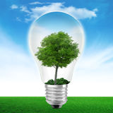 Light bulb with tree. Digital composition royalty free stock photography