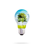 Light bulb with tree inside Stock Photography