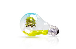 Light bulb with tree inside Royalty Free Stock Images