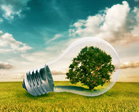 Light bulb with a tree inside Royalty Free Stock Image