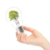 Light bulb with tree inside in hand Royalty Free Stock Photos