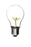 Light bulb and tree Stock Images