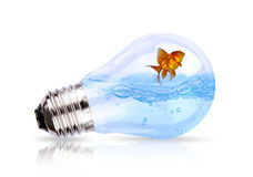 Light Bulb With Water And Fish Inside Stock Photos