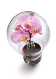 Light bulb witn Orchid flower Stock Photos