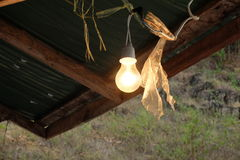 Free Light Bulb Wood Ceiling, Country Stock Photography - 59129822