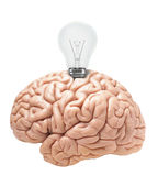Light bulb wrapped in the brain Royalty Free Stock Photos
