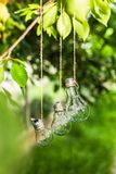 Bulbs in the garden hang on the tree Royalty Free Stock Image
