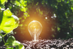 Light bulbs with glowing one. Idea and creativity concept Stock Photos