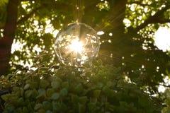 Light bulbs with green plants for saving energy concept. Stock Photos