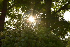 Light bulbs with green plants saving energy concept. Royalty Free Stock Image