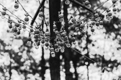 Light Bulbs hanging in the opening at pine forest. stock photography