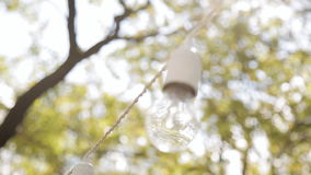 Light bulbs hanging from a tree in the area of wedding ceremony in evening stock video footage