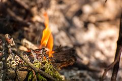 Ignite the fire. Macro shot of bonfire, white smoke, hot, glowing coal and fire Royalty Free Stock Images