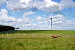 Light bulbs on string with light shimmering through the blue sky. Healthy Horse In Pasture. Wind turbines in green field landscape stock photos