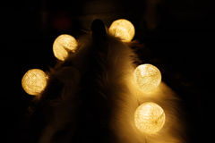 Light bulbs on white fur and dark background. Royalty Free Stock Image
