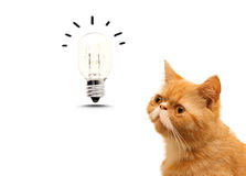 Light buld and cat. On white stock photo