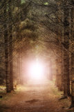 Light burst forest Stock Images