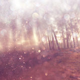 Light burst among meadow trees. filtered image. Royalty Free Stock Image