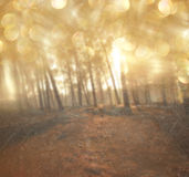 Light burst among meadow trees. filtered image Stock Photos