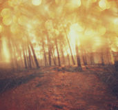 Light burst among meadow trees. filtered image Royalty Free Stock Image
