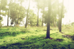 Light burst among trees and golden bokeh lights. vintage filtered image Royalty Free Stock Photography