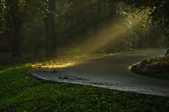 Light bursts on a forest road after the rain Stock Photography