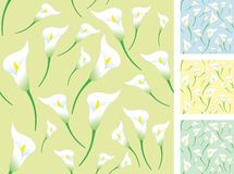 Light calla backgrounds. Set of seamless backgrounds with calla flower Royalty Free Stock Image