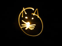 Light Cat Stock Photos