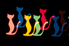 Light cats Royalty Free Stock Image