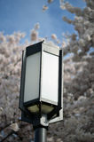 Light with cherry blossom. Light in front of blooming cherry blossoms Royalty Free Stock Images
