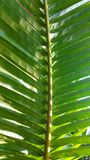 Light on coconut leaves Stock Photos