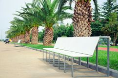 Light-colored bench in a pedestrian zone amidst a palm alley. Royalty Free Stock Image