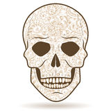 Light-colored patterned human skull Royalty Free Stock Image