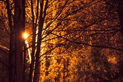 Light coming through trees in autumn royalty free stock photos
