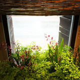 Light coming through the window with green plants Stock Photography