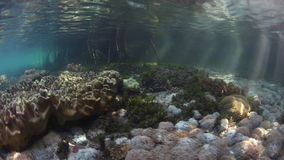 Light and Corals at Edge of Mangrove Forest stock footage