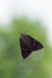 Light Crimson Underwing Moth sitting behind Window in front of Tree Stock Photo