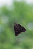 Light Crimson Underwing Moth sitting behind Window in front of Tree Stock Images