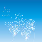 Light dandelion. Illustration of simple light dandelion Royalty Free Stock Images