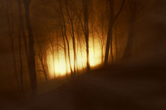 Light in dark forest with fog on Halloween Royalty Free Stock Image