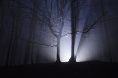 Light in dark forest at night on Halloween. Light in a dark forest at night on Halloween stock photos