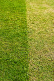 Light and dark green grass Royalty Free Stock Photos