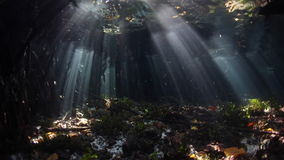 Light and Dark in Mangrove Forest. Beams of sunlight shine on the edge of a mangrove forest in Raja Ampat, Indonesia. This tropical region is known for its stock video
