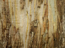 Light and dark natural wooden smooth background. Stock Photo