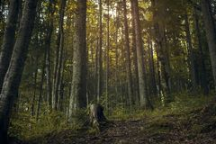 light in a dark forest royalty free stock photography